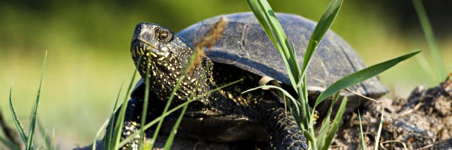 Ośrodek Ochrony Żółwia Błotnego